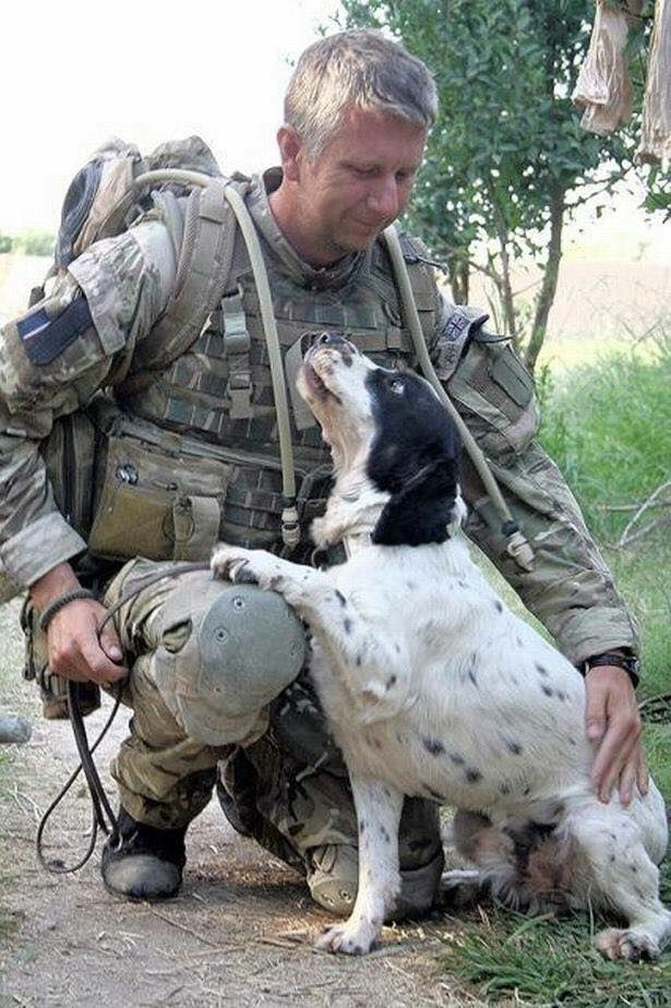 MWD Memphis - E.O.W. 16 February 2017. A MWD who saved countless lives and was awarded a medal for sniffing out Taliban booby-trap bombs has died. Spaniel Memphis was 11 when he died after his second bout of cancer. His owner, former RAF police dog handler Mick McConnell adopted Memphis when he retired from the forces in 2014. Read more: http://snip.ly/1rzyo Thank you for your service MWD Spaniel Memphis. You are a HERO. Run free Warrior boy - You have earned your wings.