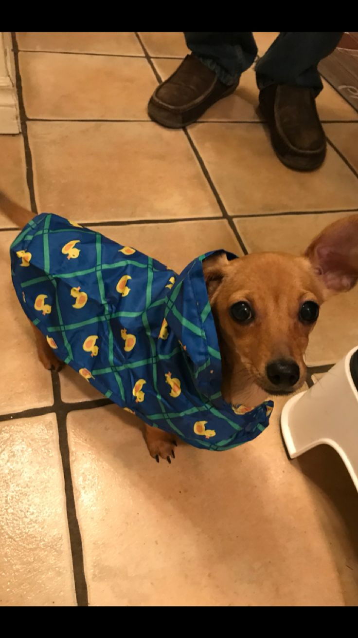 Stella's new raincoat