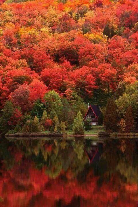 Quebec, Montreal, Canadá. Frondosos árboles en pleno otoño, aún sin la nieve. ¡No dejes de viajar!