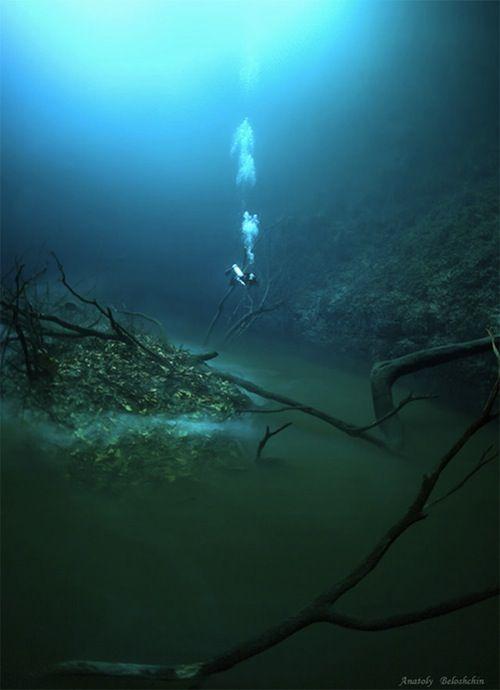 Cenote Angelita, underwater river off the Yucatan Peninsula