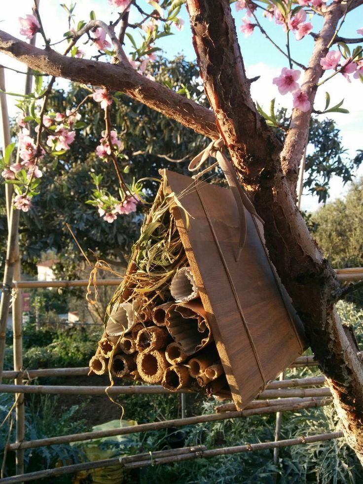 Casa per gli insetti.  Maria Cappello
