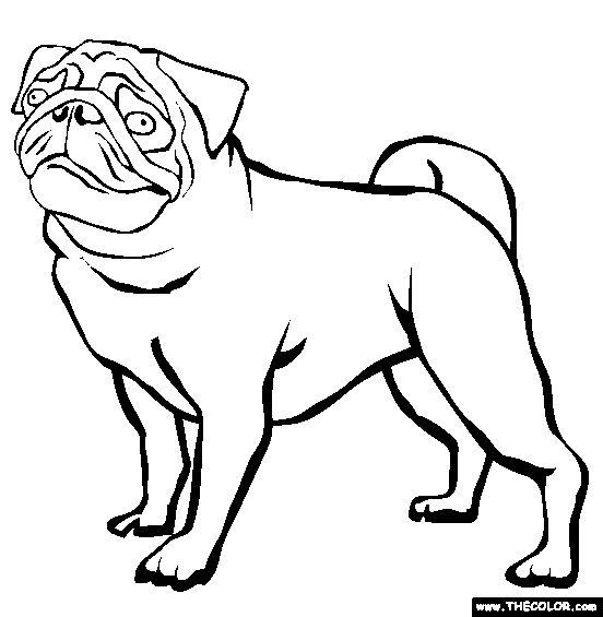 Pug Coloring Page | Free Pug Online Coloring