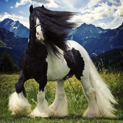 This horse is more fierce than i can ever hope to be