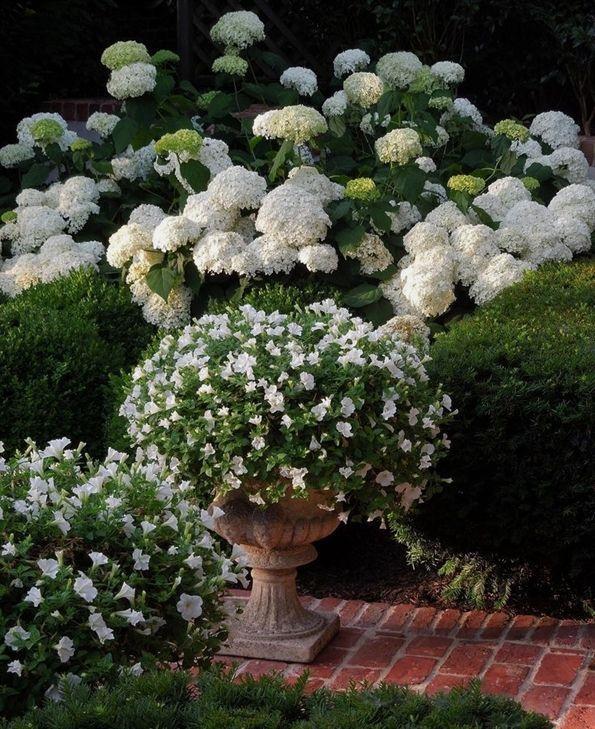 Understanding Container Gardening White Gardens Annabelle