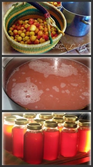 Mary's Little Corner In The Woods: Crab Apple ( or Apple) Jelly Recipe
