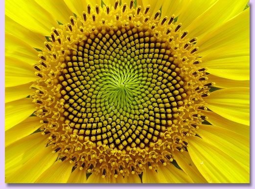 Nature's mandalas