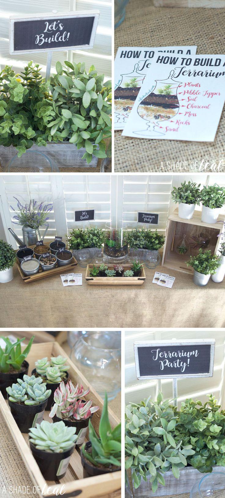 best plantsgardening images on pinterest plants air plants
