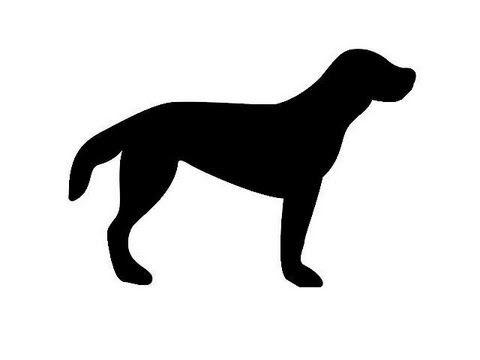 ▶ Adivinanzas con animales domésticos. Qué forma tienen. ideal para niños - YouTube