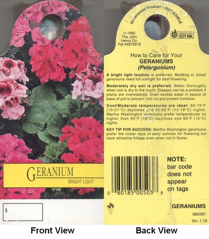 Best 20 geranium care ideas on pinterest geranium plant geraniums and container flowers - How to care for ivy geranium ...