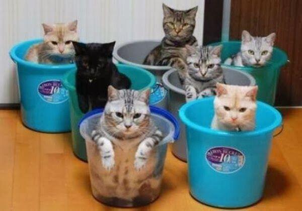 """Por naturaleza los gatos son mas solitarios que otros animales, como los perros que les gusta estar en manadas o en grupos, los gatos están en grupo por lo regular solo cuando están en casa, pues prefieren perderse que estar solitarios que en manadas, hoy te dejoImágenes De Gatos En grupo Para Descargar. lindas imágenes de gatos en grupo para compartir. """"Imágenes De Gatos En grupo Con Lentes"""" """"Imágenes De Gatos En grupo En Png"""" """"Imágenes De Gatos En grupo Para Compartir"""" """"Imágenes De Gatos…"""