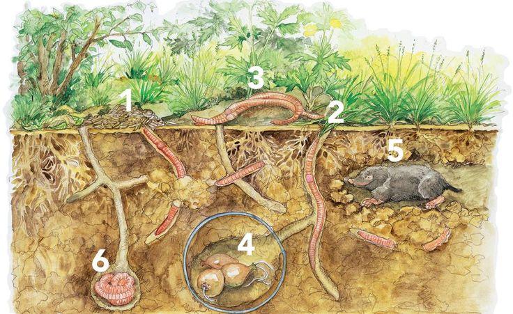 Kompostwürmer ernähren sich von organischen Abfällen und erzeugen daraus Wurmhumus, einen wertvollen Biodünger. In einer Wurmkiste kann man die Tiere ganz einfach für sich arbeiten lassen.