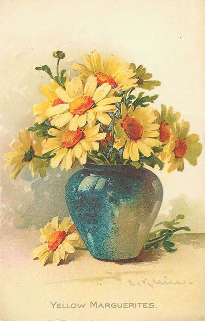 """Yellow Marguerites"" ~ daisies"