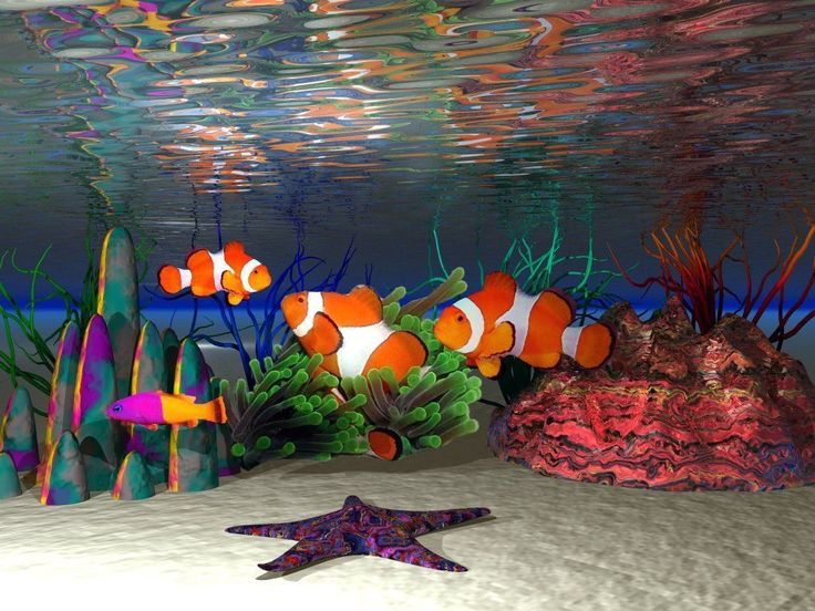 peces-payaso.jpg