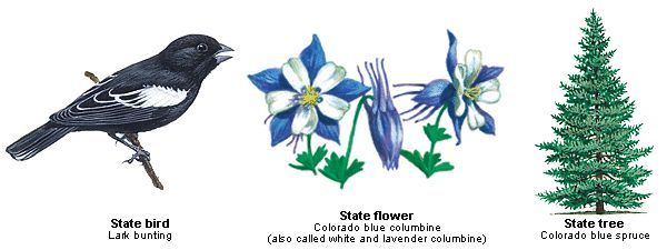 colorado state bird flower and tree united states pinterest