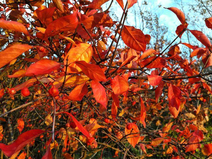 #herfst #autumncolors