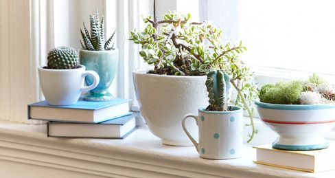 106 best terrariums and container gardens images on for Indoor gardening retailers