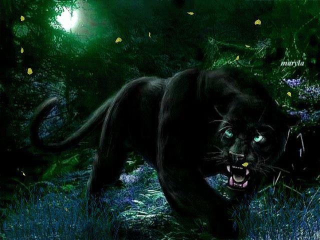 Fondos 4k Hd De Panteras Negras: BLACK PANTHER Blackpanth_NWyXxSk4.gif (640×480)