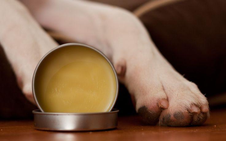 DIY Paw Wax & snuit zorg voor honden
