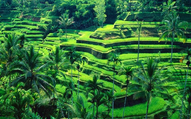 East and Central Bali Full Day Tour Discover a delightful blend of tradition, art, nature and spirituality that defines the true essence of a Bali experience.