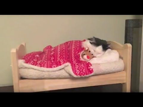 Officially...Archangel641's Blog: Cat Puts Herself to Sleep in Tiny Human Bed
