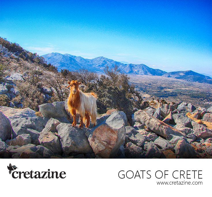 Enjoying the view to the plateau? http://cretazine.com/en/crete/travel-explore/island-routes/item/1455-kato-simi-omalos-viannou-routes