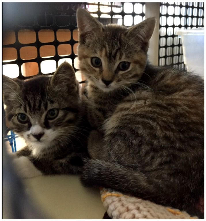 Chilliwack Animal Safe Haven Society - New Arrivals