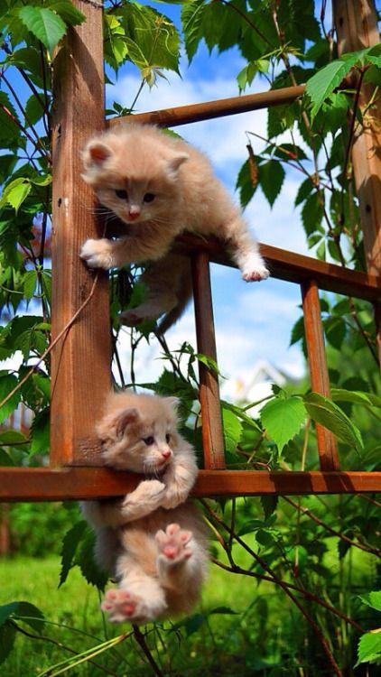 Hang tight, buddy, I'm comin'!