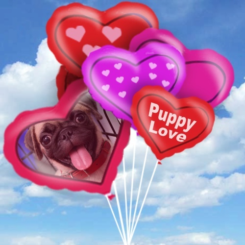 Seeing your love's face on a balloon? Customize this balloon photo frame on ImageChef: http://www.imagechef.com/ic/make.jsp?tid=Heart+Balloons #balloons #heart #love #pug #ImageChef