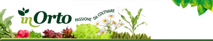 Il cumino, come coltivarlo e utilizzarlo | InOrto - Guida all'orto fai-da-te. Istruzioni e consigli per coltivare le tue verdure