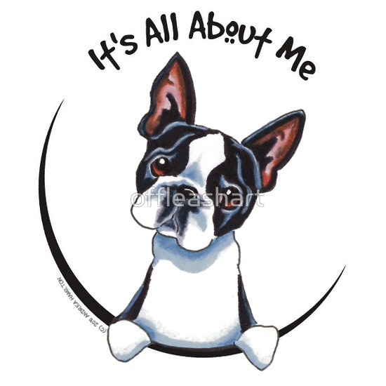 Its All About Me :: Boston Terrier Art & design by Off-Leash Art™