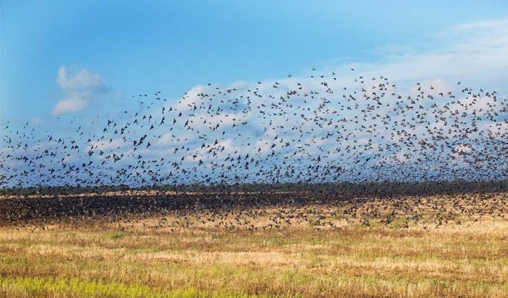 Careful Crop Selection Near Airports Could Reduce Bird Strikes - Inside Science News Service