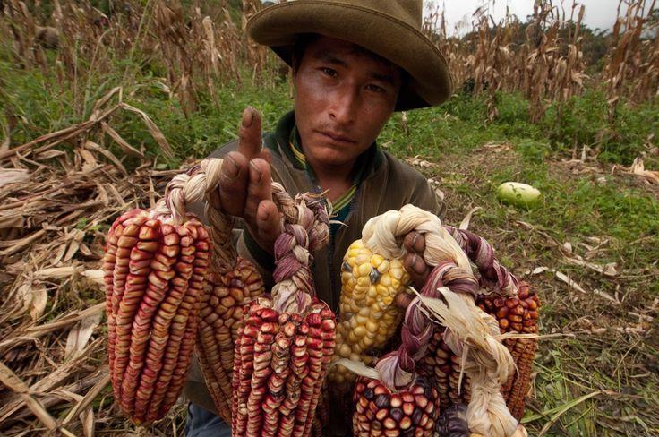 Q'ero qui montre des épis de maïs, photo: TRANSHUMANCIAS VOYAGES