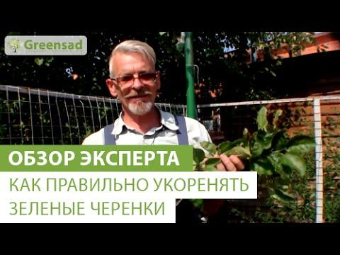 Как правильно укоренять зеленые черенки