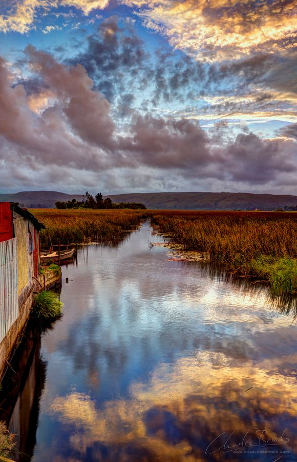 In the wetlands of Valdivia, southern Chile - by Charles Brooks