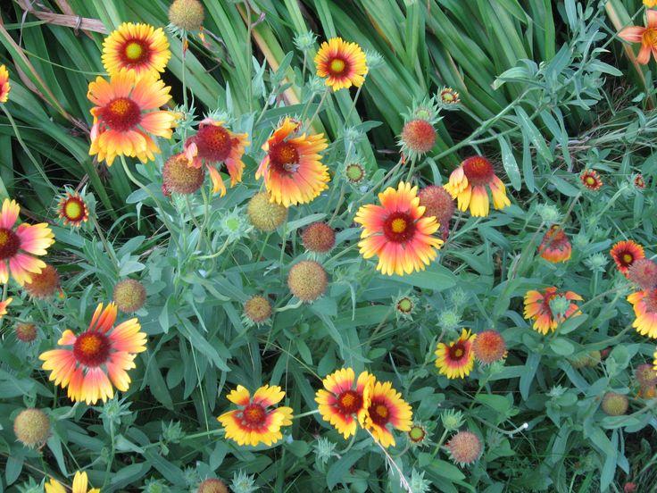 Flores en Vermont