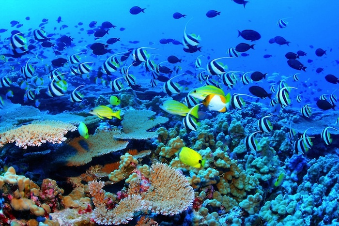 Australia wants to build a coal-shipping port on top of the Great Barrier Reef. Are you kidding me? 600,000 people are telling the bank not to pay for it -- join in: http://www.avaaz.org/en/the_great_barrier_coal_mine_global/?mhpin