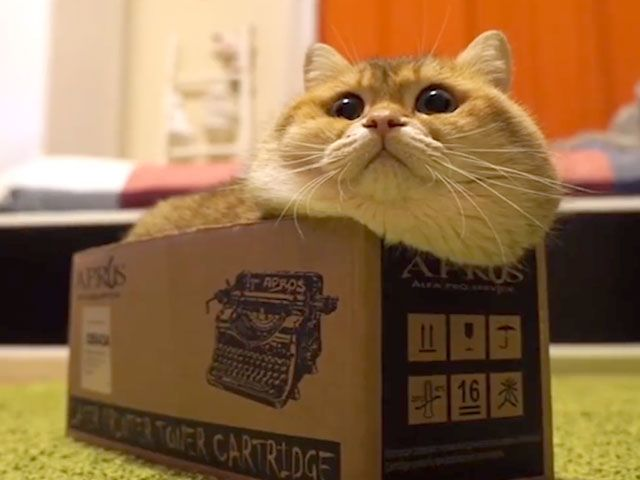 Cat Video: Cute Cat Fits and Sits In Very Small Places. A rather plump and plush kitty fits his adorable self into the craziest and tiniest places and objects! 11 million views! - www.catfaeries.com/videos/2017/05/31/cat-video-cute-cat-fits-and-sits-in-very-small-places/ - www.catfaeries.com - Products for good behavior & health for the modern housecat. #cat# #cats #catvideo