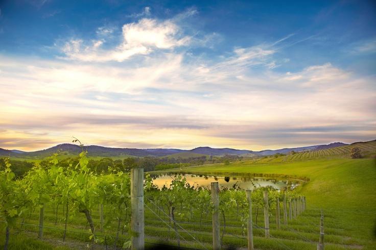 Mandala Winery in the Yarra Valley www.yarravalleywedding.com