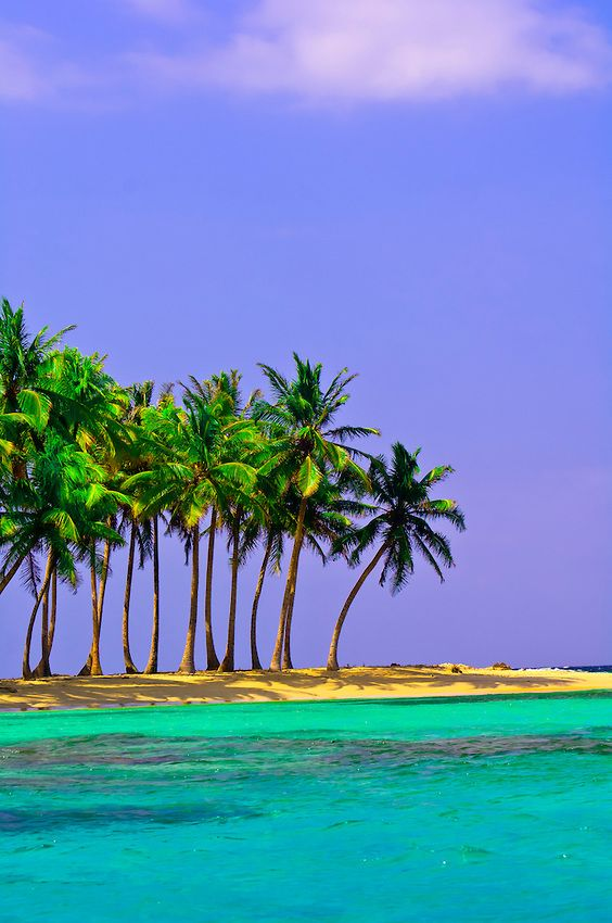 Palm trees on Pelican Island (a.k.a. Icotupo Island), San Blas Islands (Kuna Yala), Panama | Blaine Harrington