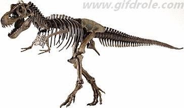 Fiche sur les fossiles et le métier de paléontologue - Saperlipopette