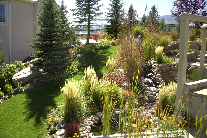 30 best colorado native plants images on pinterest