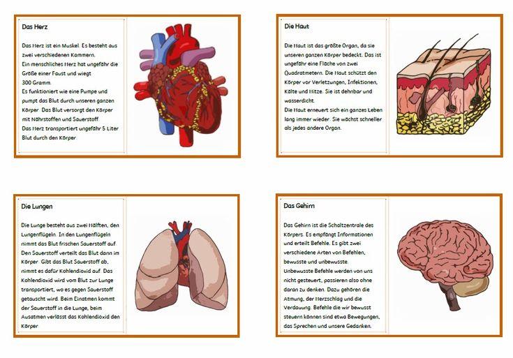10 best Sachunterricht - Körper images on Pinterest   Elementary ...
