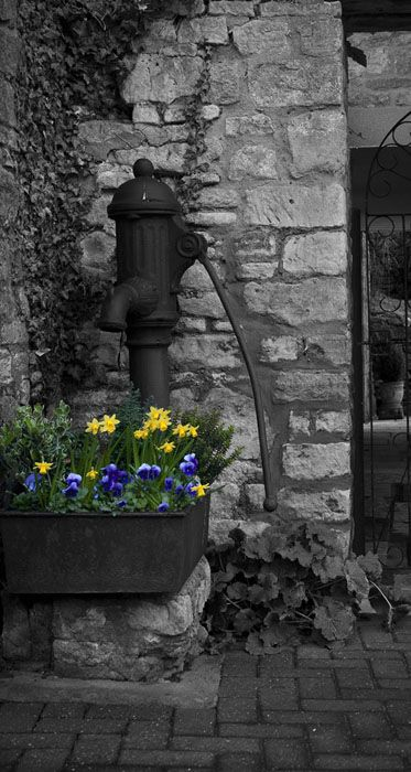 black and white photography with a splash of color #flowers