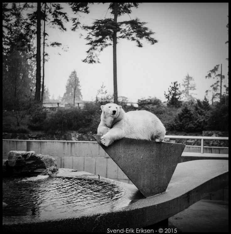 Stanley park zoo, Vancouver
