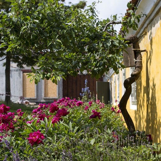 Prettiness (and a bit of construction work) in the museum garden, right outside what was Michael and Anna Anchers first home together in Skagen #skagensmuseum