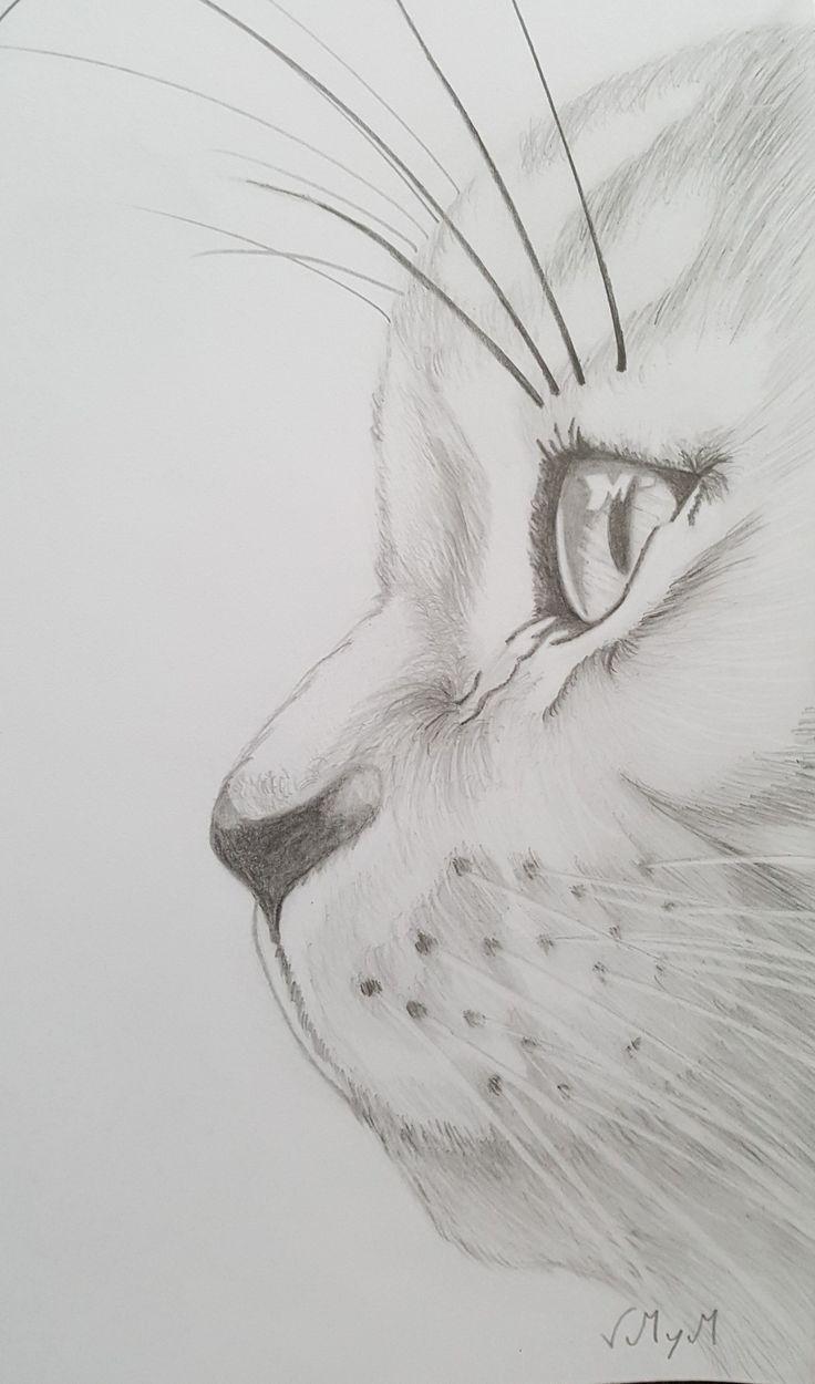 Malvorlagen Malvorlagen Tekenen Realisticeye Malvorlagen Malvorlagen Tekenen In 2020 Illustration Tiere Zeichnungen Bleistiftzeichnung
