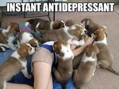 Anytime you need a lift, crash a local puppy socialization class! #Antidepressant