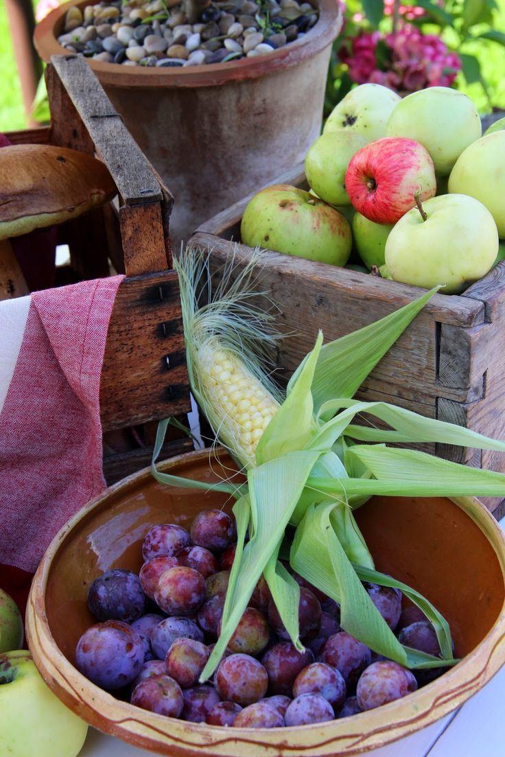harvest in our garden