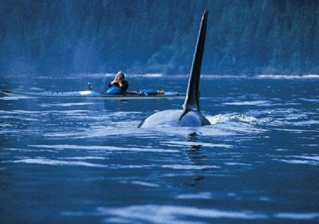 Tofino, British Colombia. Rugged Coastal landscape and whale watching!!