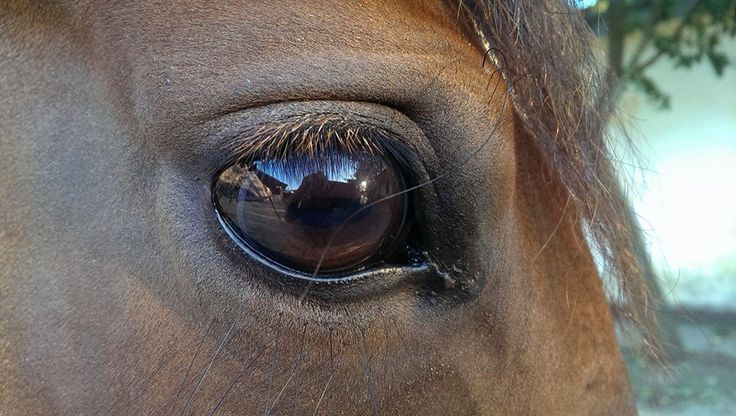"""""""Lovas szív, és lovas lélek, lovas leszek amíg élek!"""""""